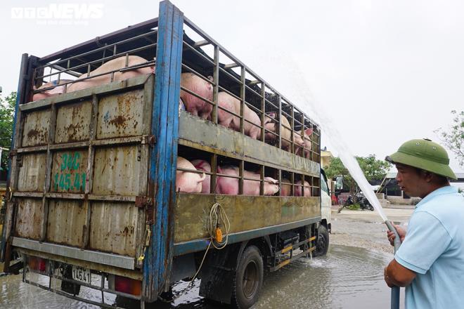 Giá lợn hơi giảm, giá tại chợ vẫn cao ngất - 1
