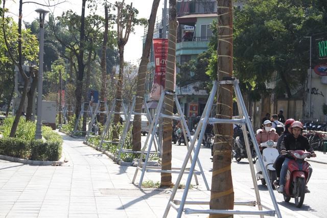 Hà Nội: Diện mạo mới của phố Trích Sài sau khi đánh chuyển 96 cây hoa sữa - 7