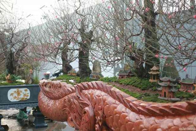 Ngắm chậu đào khủng Long quyện ngũ hành sơn giá bạc tỷ trên phố Hà Nội - 4