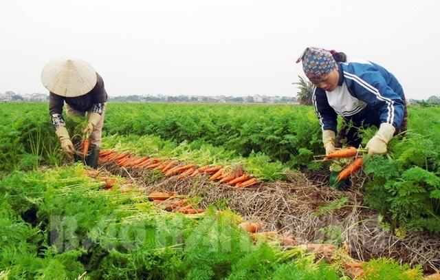 Mỗi năm chia nhau gần 6.000 tỷ đồng, làng tỷ phú hiếm có Việt Nam - 2