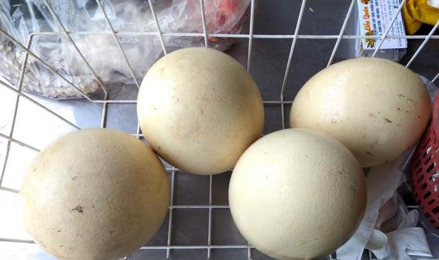 Trứng đà điểu Emu giá tiền triệu, nhà giàu ăn sang cũng phải nhịn miệng - 5