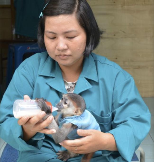 Thảo Cầm Viên Sài Gòn giảm 30% thu nhập của 300 nhân viên để lo cho 1.500 con vật, đóng cửa 2 tháng vì COVID-19 - Ảnh 1.