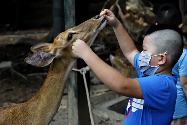 Thảo Cầm Viên Sài Gòn giảm 30% thu nhập của 300 nhân viên để lo cho 1.500 con vật, đóng cửa 2 tháng vì COVID-19 - Ảnh 4.