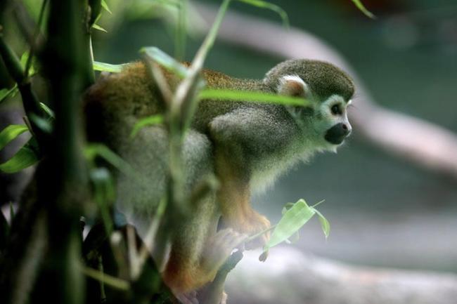 Thảo Cầm Viên Sài Gòn giảm 30% thu nhập của 300 nhân viên để lo cho 1.500 con vật, đóng cửa 2 tháng vì COVID-19 - Ảnh 2.