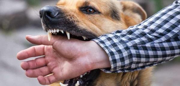 Cùng bị chó nhà nuôi cắn một trong ba người lên cơn dại và tử vong - Ảnh 1.