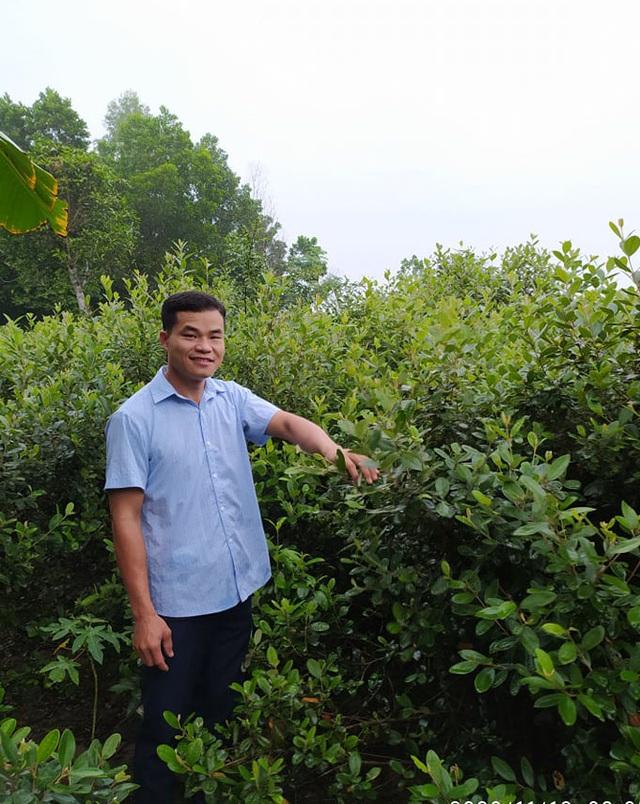 Bỏ việc về quê trồng cây không ai thèm lấy, cử nhân thu đều 4 tỷ đồng/năm - Ảnh 1.