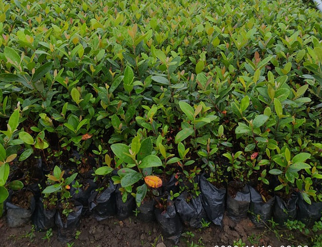 Bỏ việc về quê trồng cây không ai thèm lấy, cử nhân thu đều 4 tỷ đồng/năm - Ảnh 5.