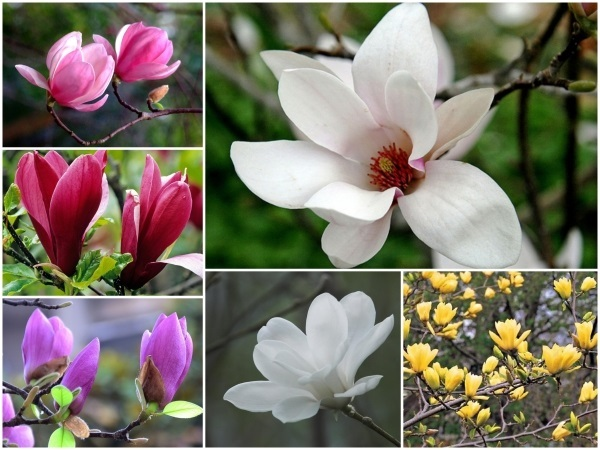 Người Hà Nội chi tiền triệu đặt mua cây hoa đẹp lạ chuẩn bị chơi Tết - Ảnh 1.