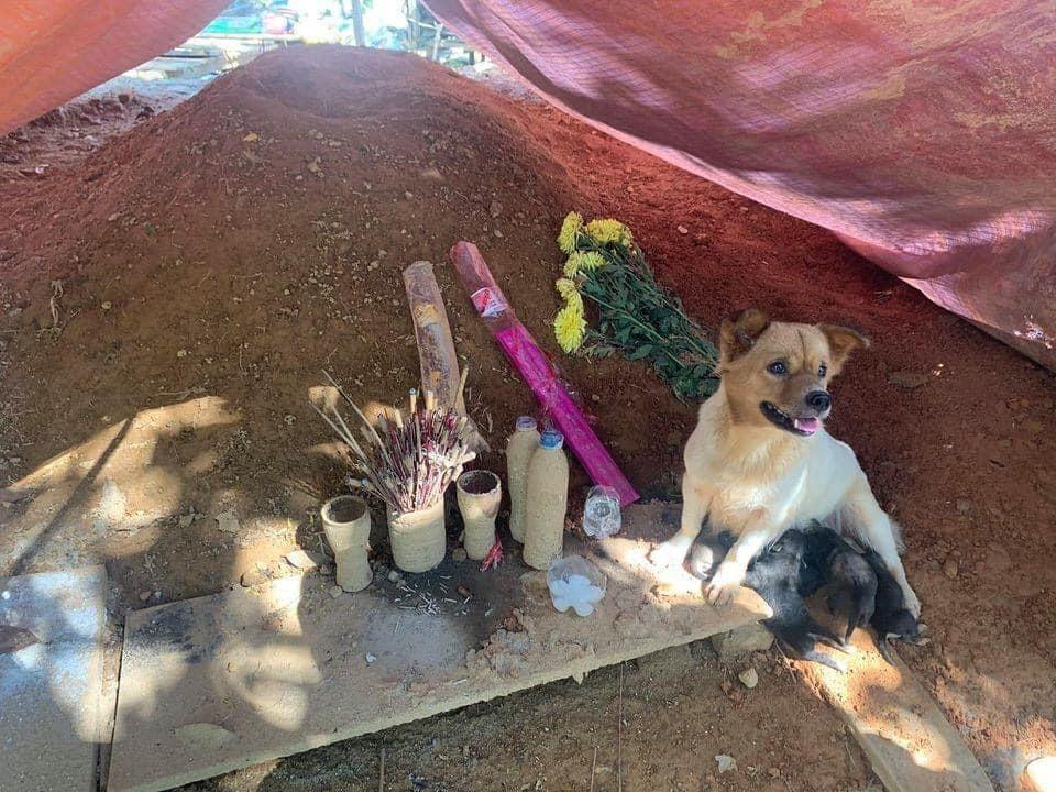 Chú chó nhỏ và đàn con quẩn quanh bên mộ chủ không rời sau vụ sạt lở kinh hoàng ở Trà Leng - Ảnh 2.