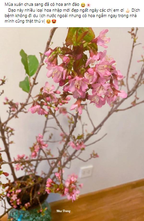3 loại cây đang được chuộng mua dịp cận Tết Tân Sửu, hứa hẹn tạo hot trend  - Ảnh 1.