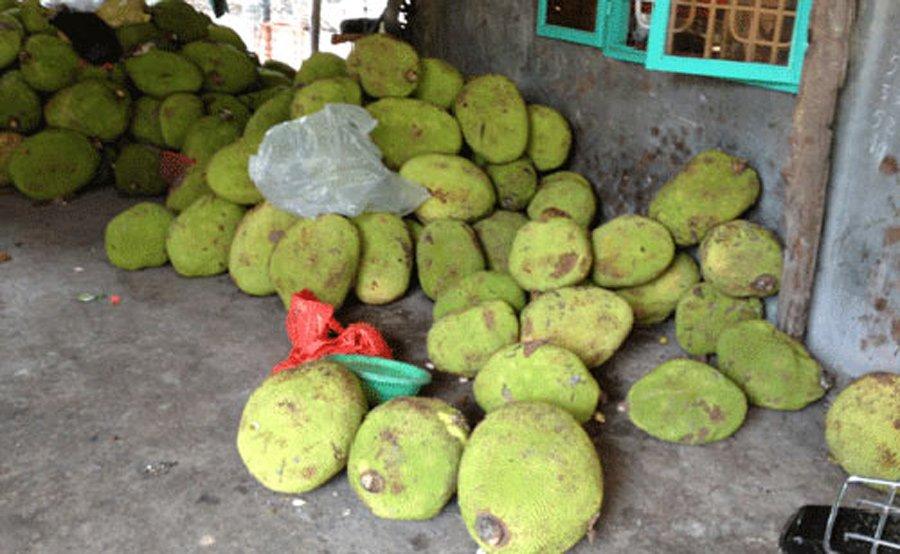 Bất ngờ với loại hạt người Việt ăn xong thường bỏ đi lại được coi là bổ dưỡng, bán 200.000 đồng/kg tại Nhật - Ảnh 3.