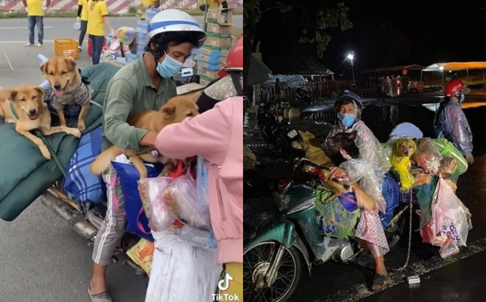 Vụ tiêu hủy 15 chú chó theo chủ về quê: Có vi phạm quy định tiêu hủy vật nuôi? - Ảnh 2.