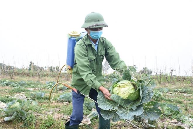 Xót xa nông sản không bán được, bị vứt bỏ đầy đồng ở Hải Dương - Ảnh 10.
