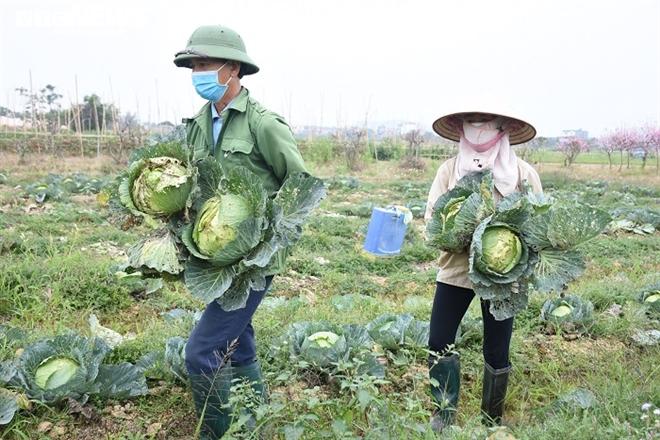 Xót xa nông sản không bán được, bị vứt bỏ đầy đồng ở Hải Dương - Ảnh 8.