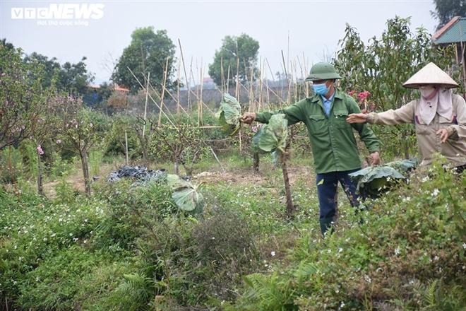 Xót xa nông sản không bán được, bị vứt bỏ đầy đồng ở Hải Dương - Ảnh 11.