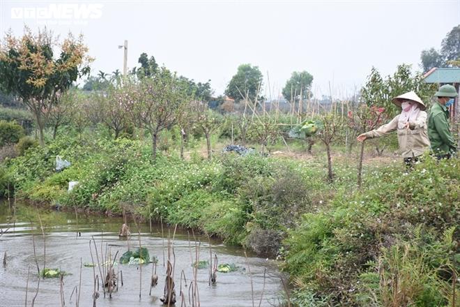Xót xa nông sản không bán được, bị vứt bỏ đầy đồng ở Hải Dương - Ảnh 9.