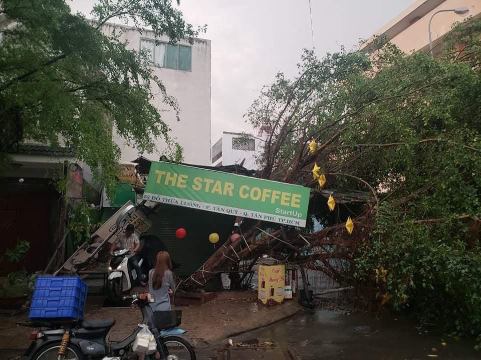 """Sài Gòn """"phố cũng thành sông"""", cây xanh bật gốc la liệt chỉ sau 1 đêm  - Ảnh 2."""