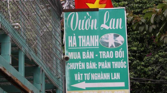 Lời khai của chủ vườn lan đột biến ở Hà Nội bị tố ôm 200 tỷ đồng bỏ trốn - Ảnh 1.