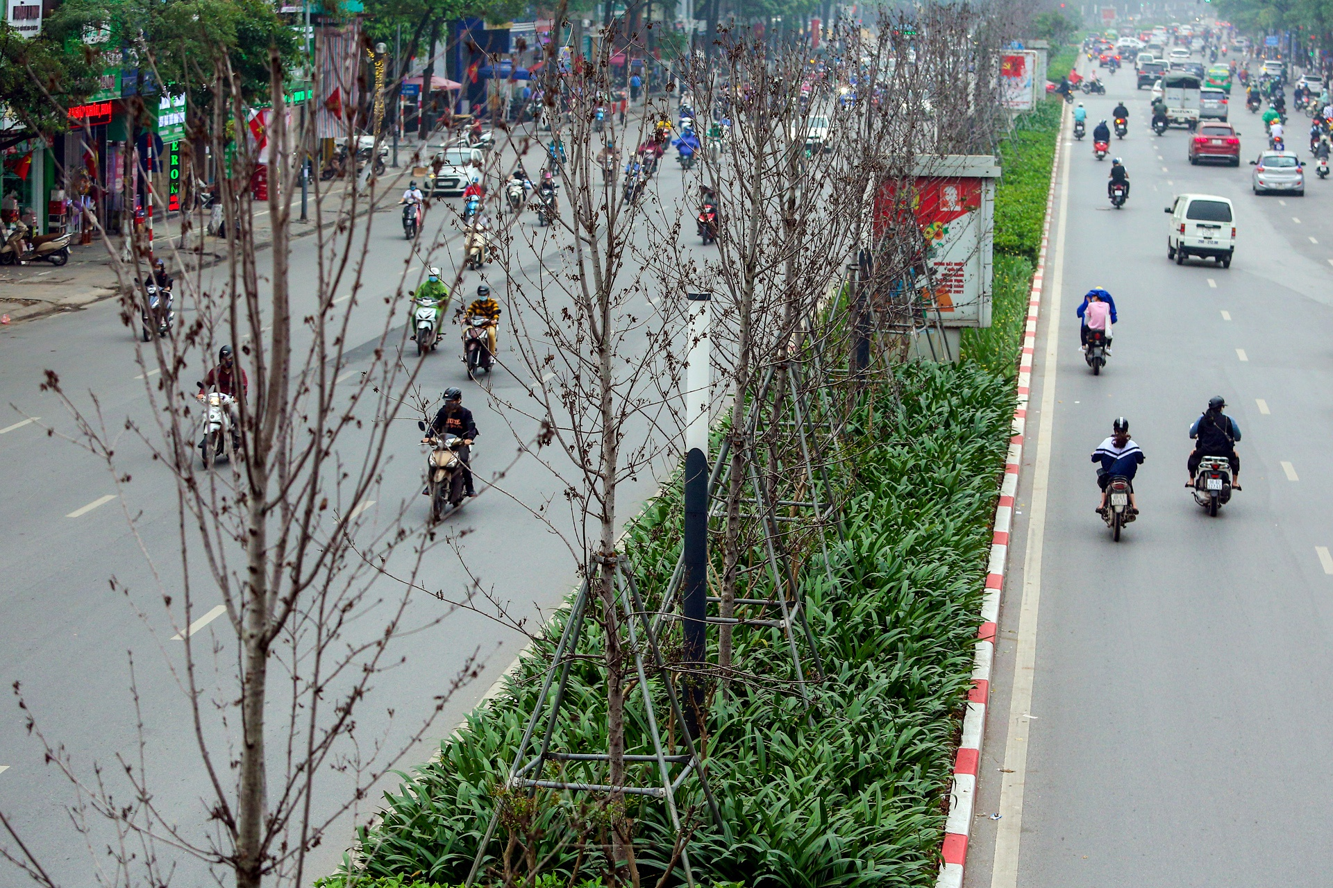 Cái chết của những cây phong lá đỏ ở Hà Nội - Ảnh 3.