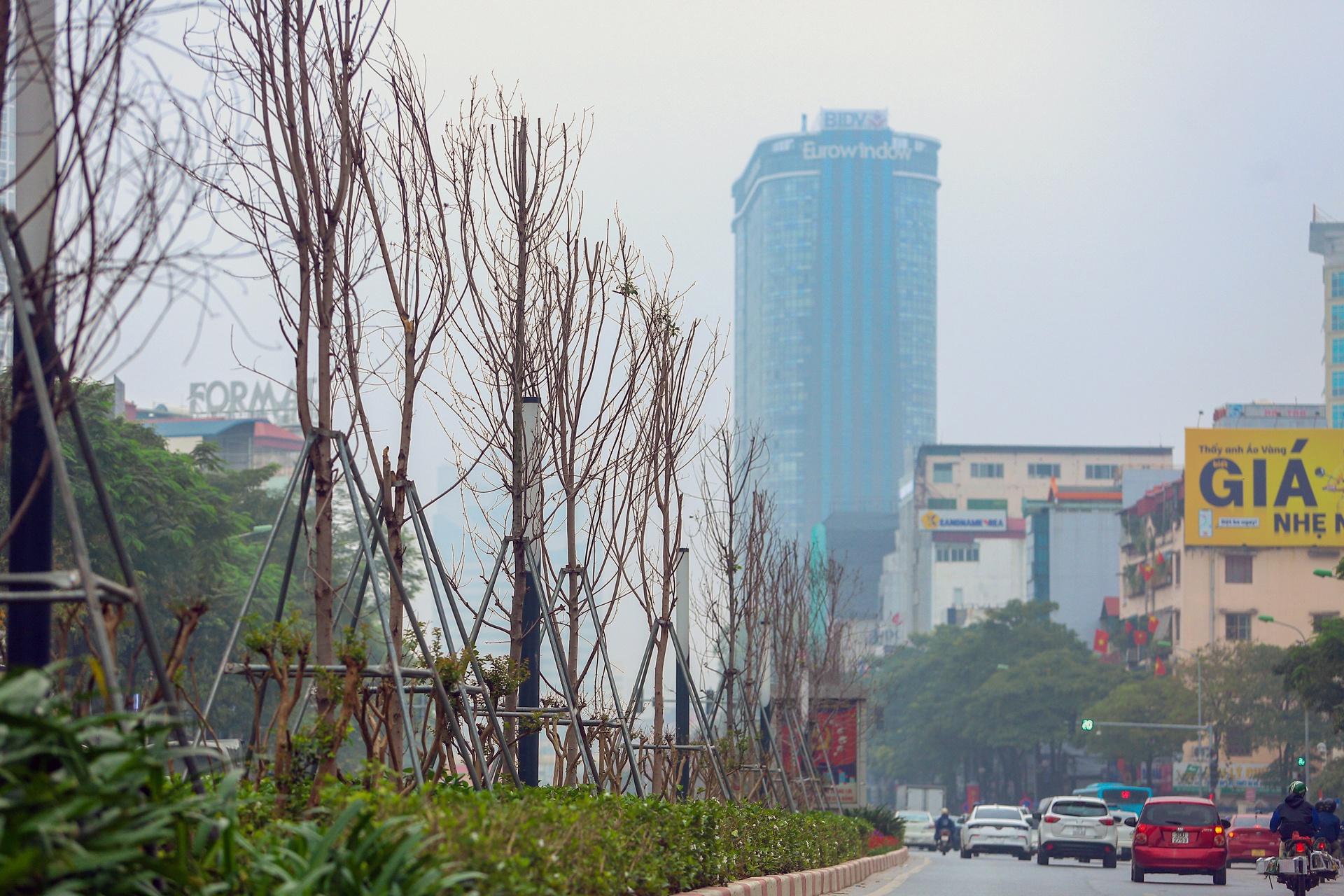 Cái chết của những cây phong lá đỏ ở Hà Nội - Ảnh 2.