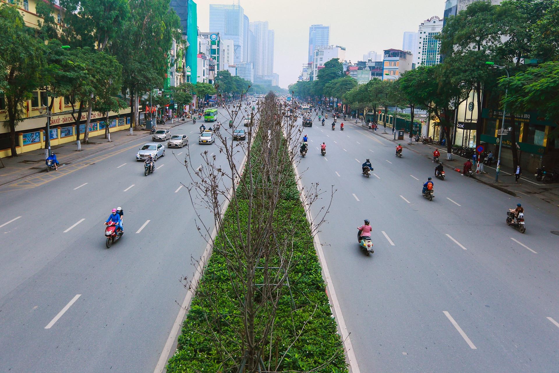 Cái chết của những cây phong lá đỏ ở Hà Nội - Ảnh 7.