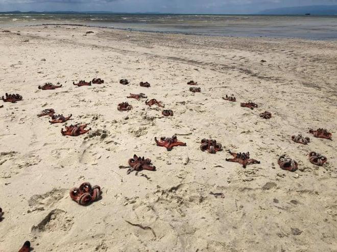 """Du khách đua nhau chụp hình """"sống ảo"""" với sao biển khiến chết khô hàng loạt trên biển Phú Quốc khiến nhiều người phẫn nộ - Ảnh 1."""