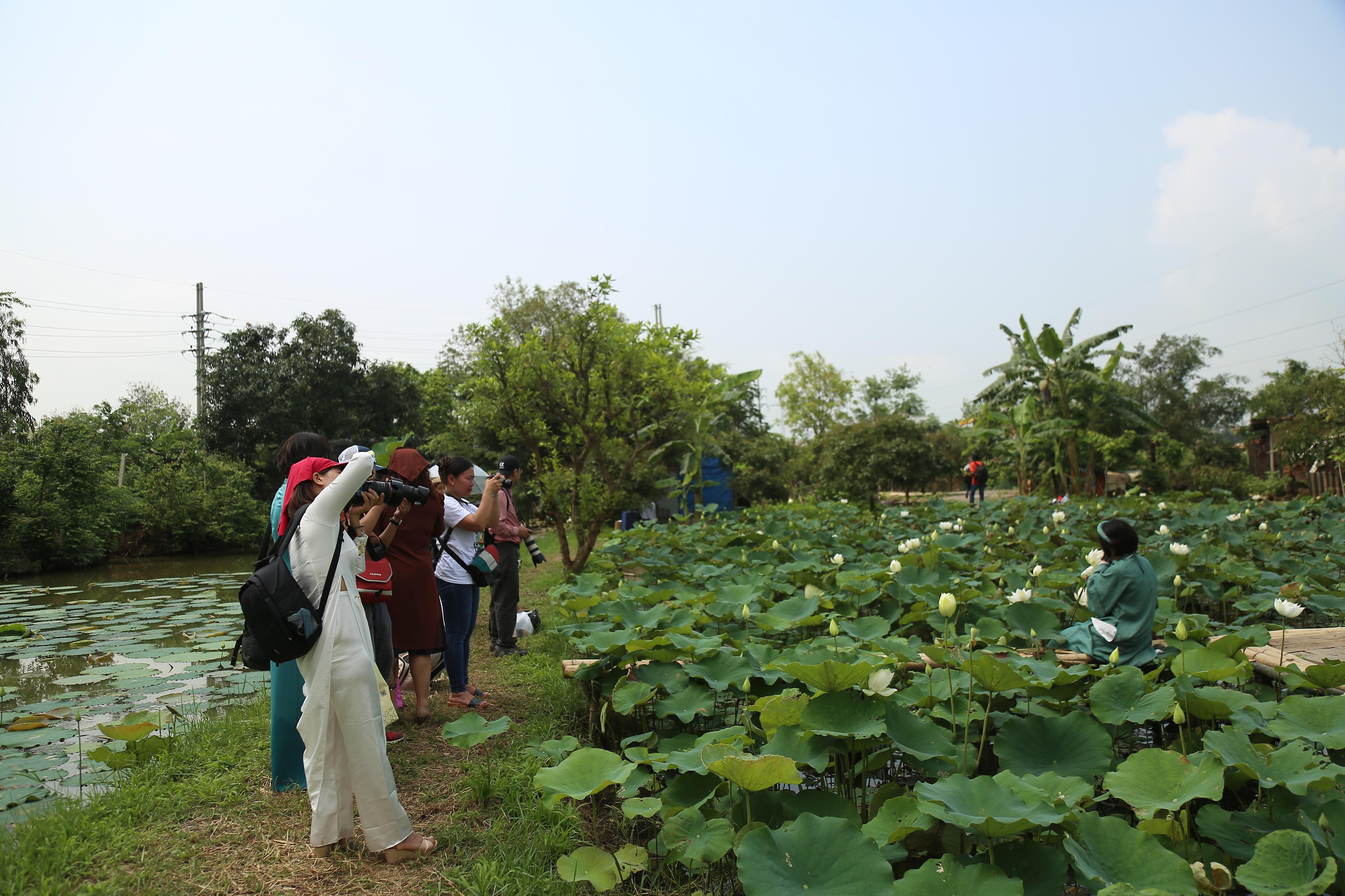 Hà Nội: Kiếm tiền triệu từ nghề trồng hoa sen trắng - Ảnh 1.