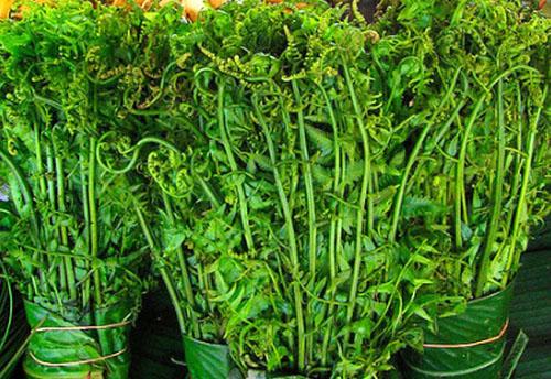 Hà Nội: Sốt xình xịch mua rau trường sinh vài trăm nghìn một kg vì được cho là có tác dụng chữa bệnh - Ảnh 9.