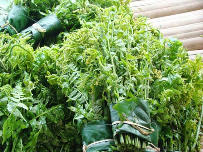 Hà Nội: Sốt xình xịch mua rau trường sinh vài trăm nghìn một kg vì được cho là có tác dụng chữa bệnh - Ảnh 5.
