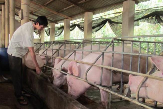 Thịt lợn giảm giá mạnh, hàng triệu hộ dân lo lắng - Ảnh 2.