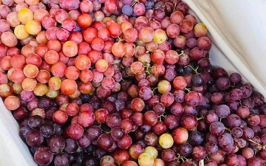 Sự thật về loại nho kẹo rừng đang gây sốt trên thị trường