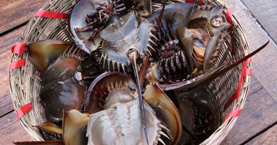 """Bọ biển """"khổng lồ"""" 1 triệu đồng/ đôi, đặc sản lạ hút khách sành ăn"""