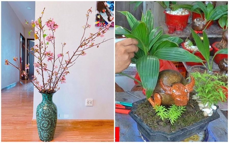 3 loại cây đang được chuộng mua, hứa hẹn tạo hot-trend dịp Tết Nguyên Đán Tân Sửu