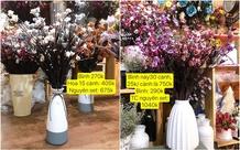 Hoa thật tưởng giả vì 3 năm không héo khiến nhiều người bất ngờ