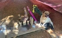 Chủ thiệt mạng sau sạt lở kinh hoàng tại Trà Leng, chó và đàn con quẩn quanh bên mộ suốt 1 tháng không rời