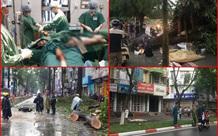 Nhiều vụ cây xanh gãy, đổ gây chết người ở Hà Nội và TP. HCM