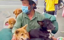 Luật sư nói gì về tính pháp lý trong vụ 15 chú chó bị tiêu hủy ở Cà Mau?