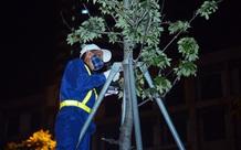 Hình ảnh công nhân xuyên đêm đánh chuyển hàng phong lá đỏ đi tránh nắng