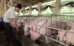 Thịt lợn giảm giá mạnh, hàng triệu hộ dân lo lắng