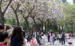 Hà Nội: COVID-19 còn phức tạp, hàng trăm người vẫn tụ tập tạo dáng với hoa ban