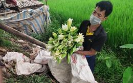 """Người dân trồng hoa Thường Tín khóc ròng khi hoa đến vụ phải """"đắp chiếu"""" do ảnh hưởng của COVID-19"""